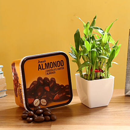 Plant with Choco Almond Box Online