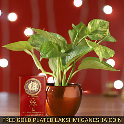 Free 24 Carat Coin With Money Plant Brass Pot