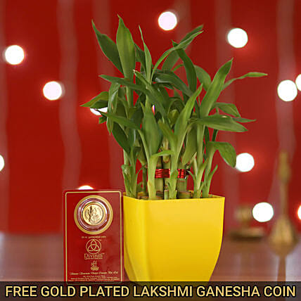 Free Gold Plated Coin With 2 Layer Bamboo Yellow Pot