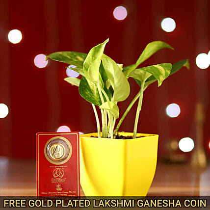Money Plant With Free 24 Ct. Gold Plated Coin Combo