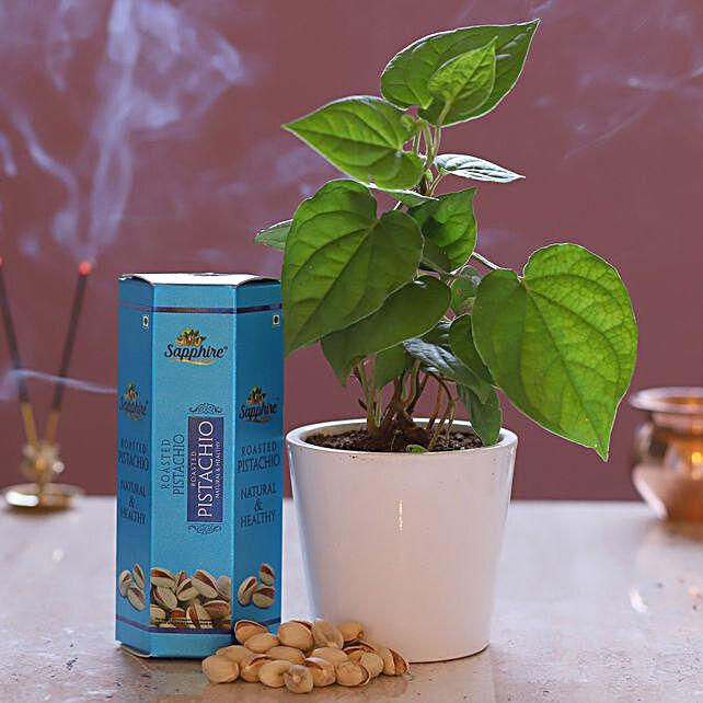 Betel Plant & Pistachios Combo