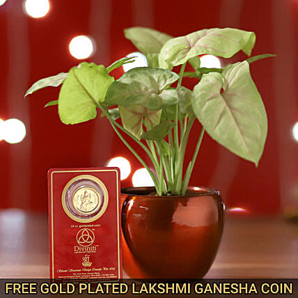 Free Gold Plated Coin & Syngonium Plant Brass Pot