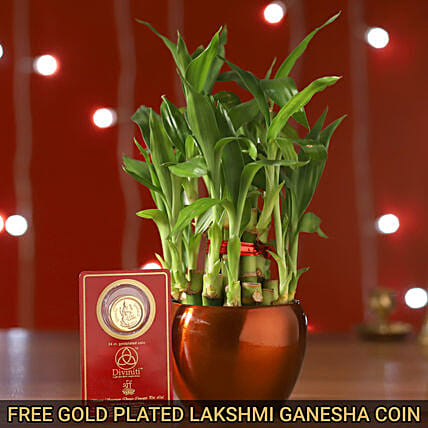 2 Layer Bamboo Plant & Free Gold Plated Coin