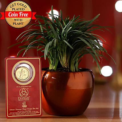 Online China Grass And Free Gold Plated Coin