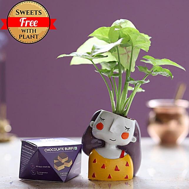 Chocolate Burfi & Syngonium Plant