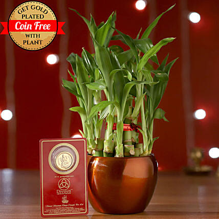 Online Bamboo Brass Pot:Metal Planters Delivery