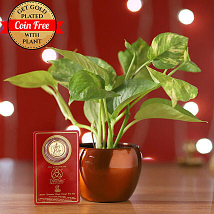 Money Plant With Free 24 Carat Coin