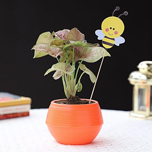 honey bee syngonium pink plant in orange pot