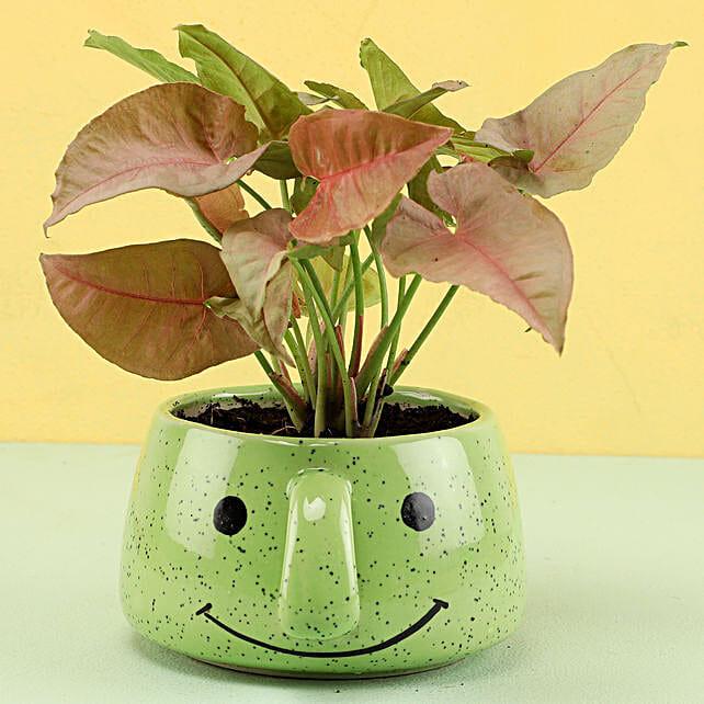 Online Syngonium Plant In Smiley Pot