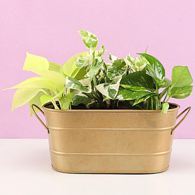 Foliage Plant Combo Metal Tray Pot