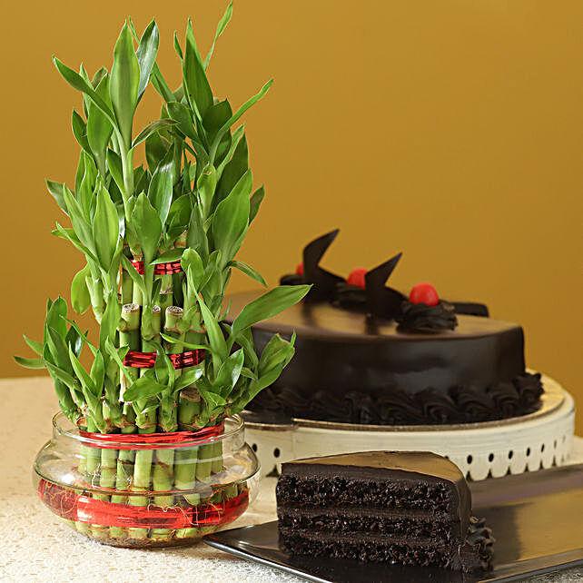 Truffle Cake N Three Layer Bamboo