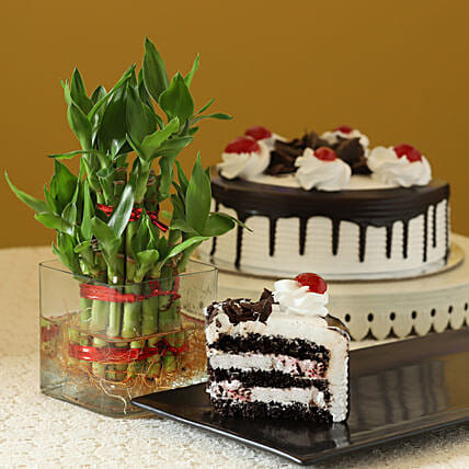 Blackforest cake with 2 Layer Bamboo:Valentines Day Lucky Bamboo