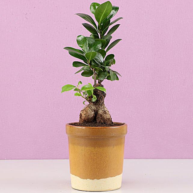 Ficus Bonsai Plant in Haiti Mocha Brown Ceramic Tumbler