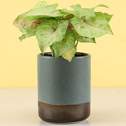 green plant with tumbler online