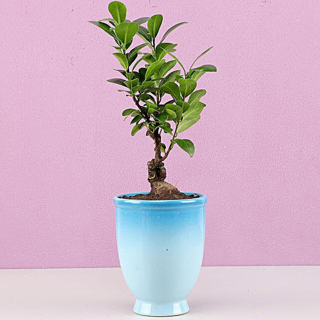 online bonsai plant for bedroom