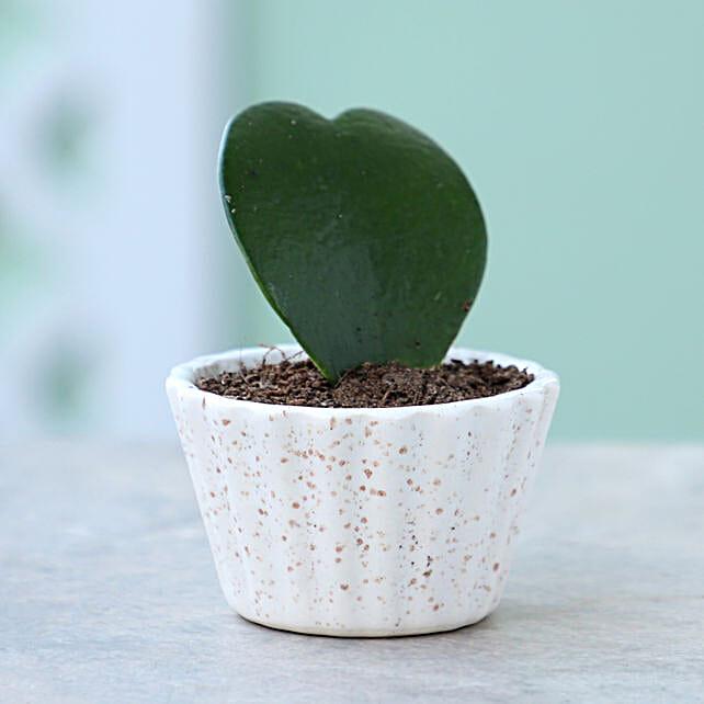 Online Hoya Plant