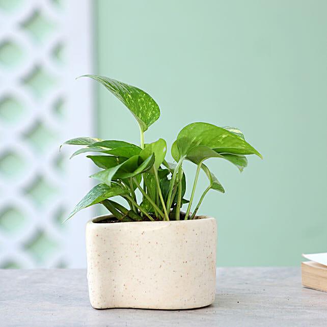 Money Plant In Heart Shaped Pot