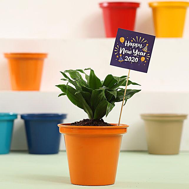 Dracaena Plant In Orange Metal Pot For New Year