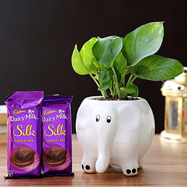 Money Plant in Elephant Pot & Cadbury Chocolates:Plant Combos