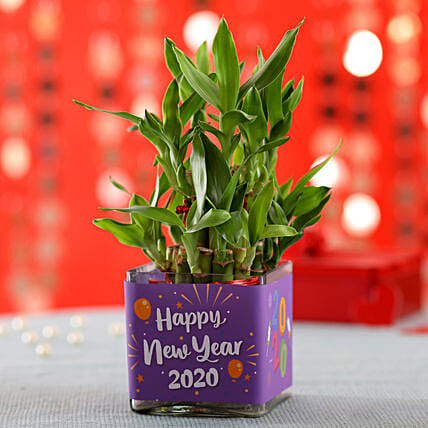 New Year Special 2 Layer Bamboo Plant
