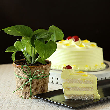 Online Money Plant With Eggless Cake
