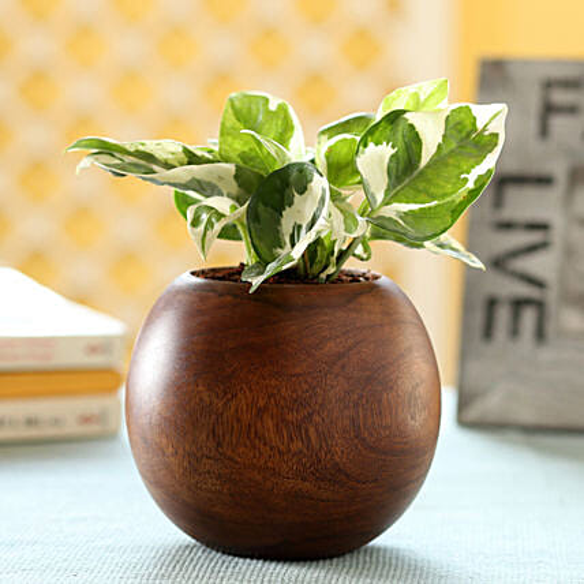 Money Plant In Wooden Planter