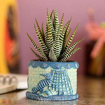Howarthia Zebra Blue Ceramic Pot