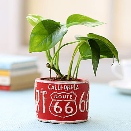 Red Potted Money Plant