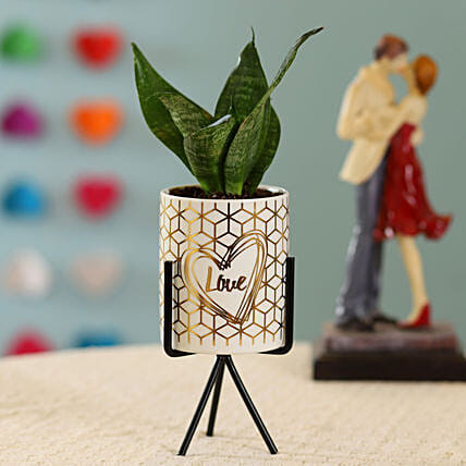 Sansevieria Plant in Ceramic Pot