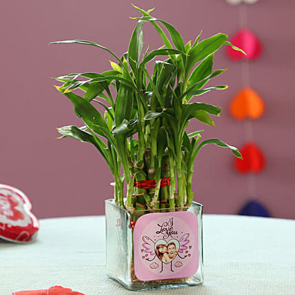 Bamboo Plant For Valentine's Day:Glass Planters Delivery