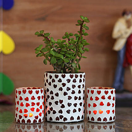 good luck plant with planter for home