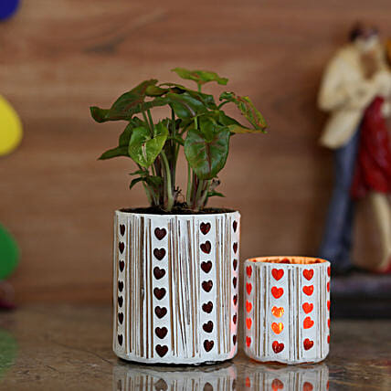 indoor plant  with attractive holder for home