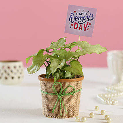 Plants For Women's Day