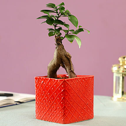 bonsai plant in red ceramic pot online