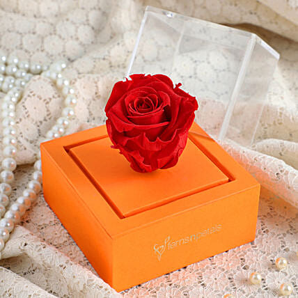 red forever rose in orange box online