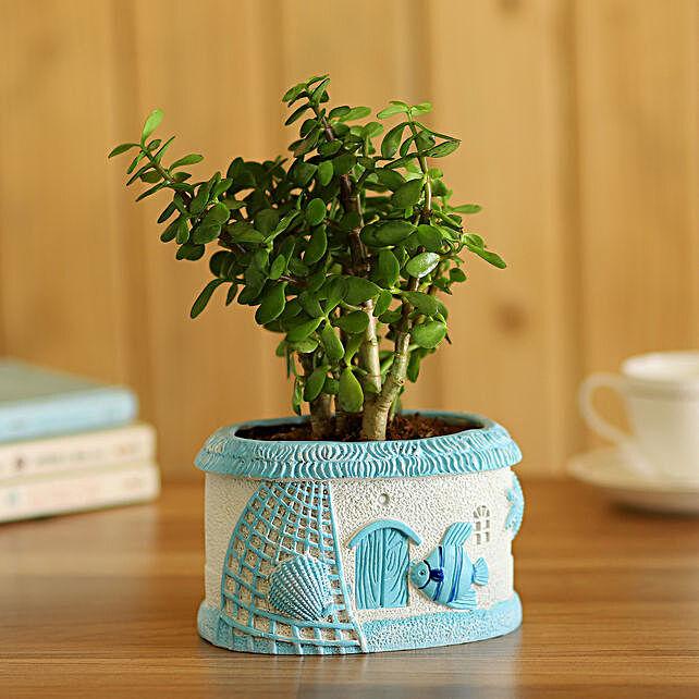 Jade Plant In Fancy Planter