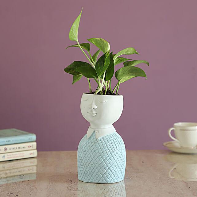 Money Plant In  Fancy Planter