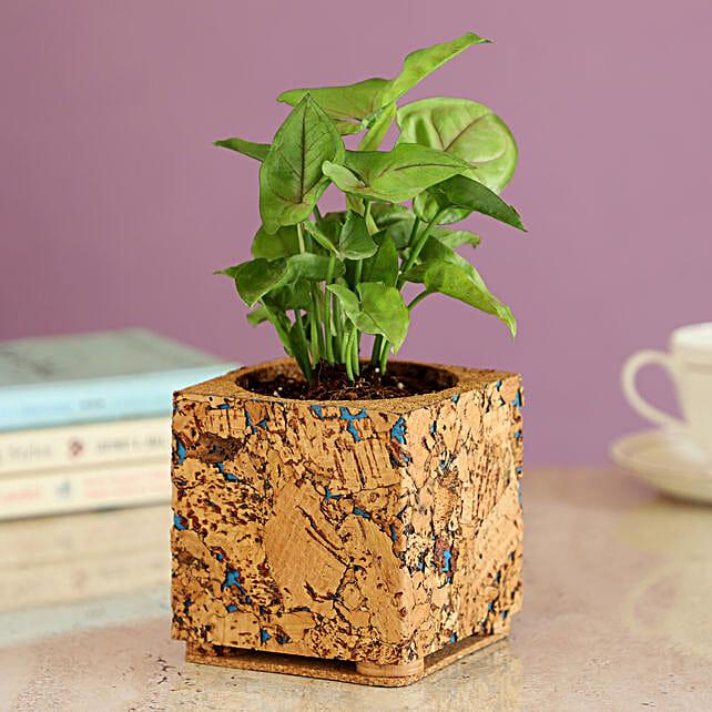 Beautiful Plant In Cork Pot