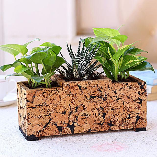 Online Plants In Cork Planter:Buy Rare Plants
