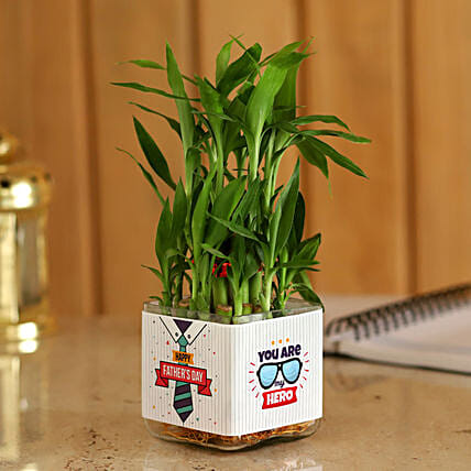 Bamboo Plant In Glass Vase For Father's Day