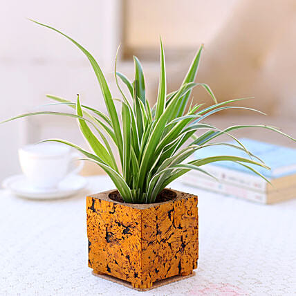 Plant with Cork Planter Online