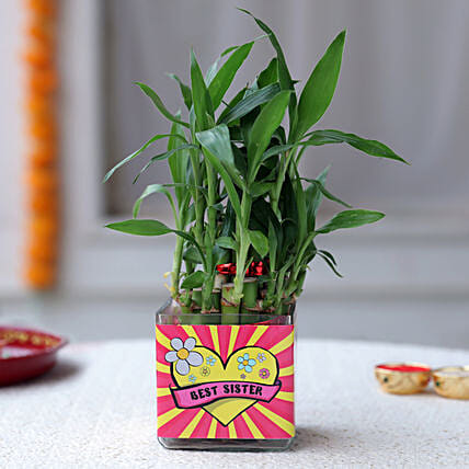 Online Bamboo Plant For Sister:Send Lucky Bamboo for Her