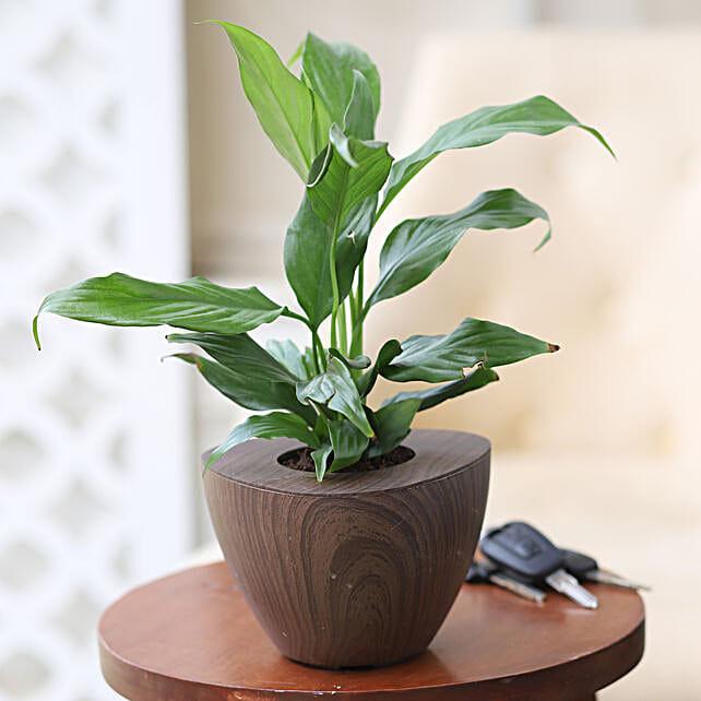 Online Peace Lily Plant