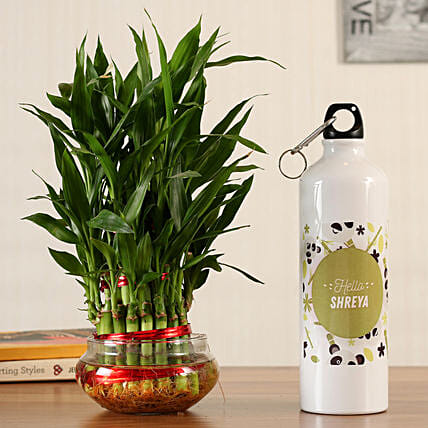 3 layer bamboo with bottle online