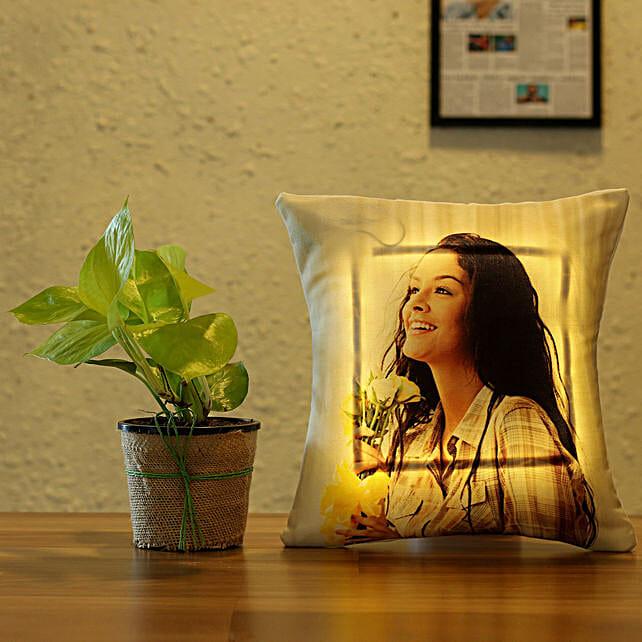 money plant with led cushion combo