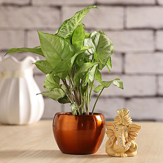 Beige Pagdi Ganesha Idol & Syngonium Plant
