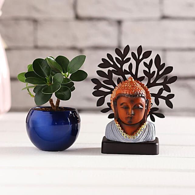 Grey Buddha Idol & Ficus Compacta Plant