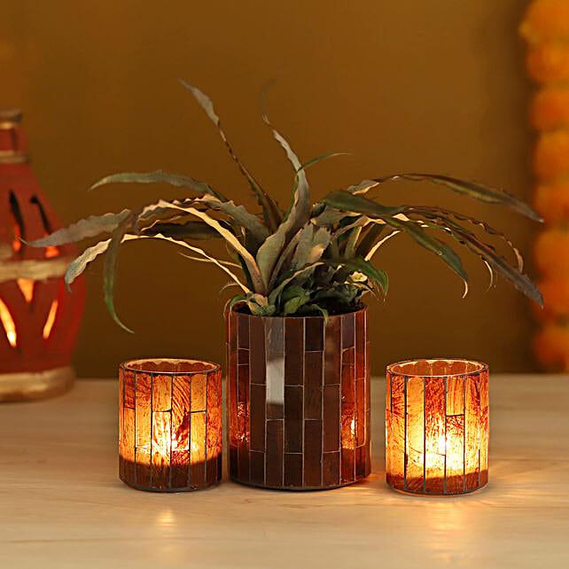 Cryptanthus Plant Brown Votives Set:Good Luck Plants for Diwali