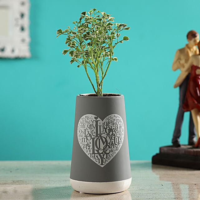Aralia Plant In Grey Ceramic Love Pot