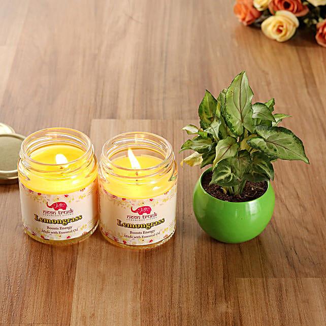 White Pothos Plant Lemongrass Scented Candles